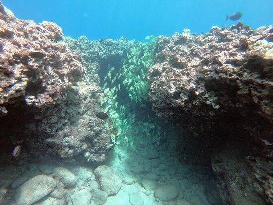 6-Hour Lanai Snorkel & Dolphin Tour from Lahaina: Schools of fish off Lanai