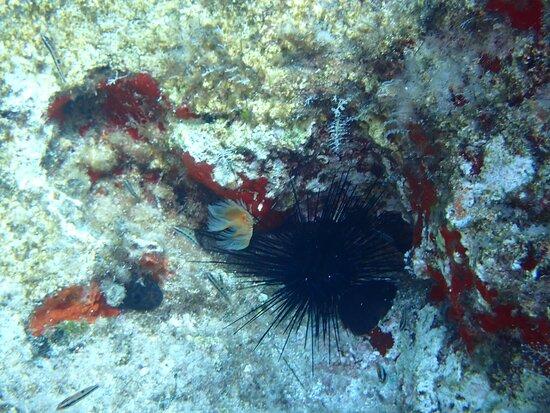 (Full day)Scuba Diving in Rhodes: Sea Urchin