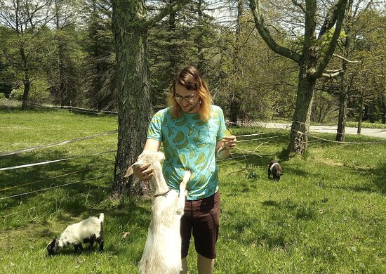 Getting mugged by a friendly fainting goat at Barakah Heritage Farm.  We offer a relaxed and education goat playtime tour, as well as our strenuous and scenic hike with the goats.