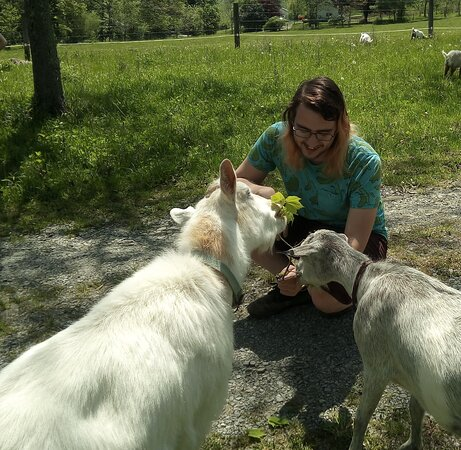 Making friends with some of our fainting goats before heading out on the goat herding hike.
