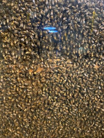 Beehive inside ridiculous museum and excellent tomb outdoors which requires no admission fee