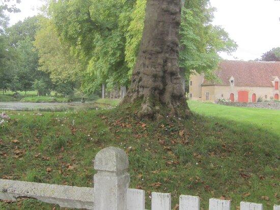 Château du Breuil Yvain. Vue 83. Platane Centenaire devant Les Jardins, et La Grande Annexe. 18 Septembre 2021. Orsennes.