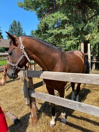 Petting the horse ... beautiful animal.