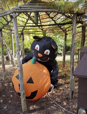 Africa section: Happy Halloween! October 2020
