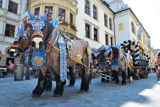 Das HB Prachtgespann vor dem Hofbräuhaus.