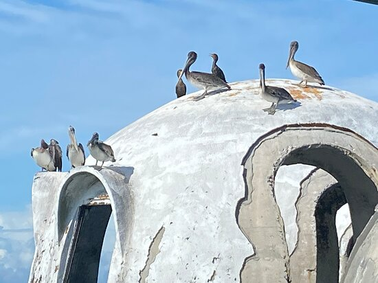 Cape Romano Shelling and Sightseeing Boat Tour from Marco Island: Dome house