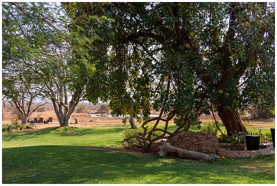 Garden area with the waterhole in the distance