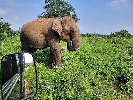 Safari Tours Udawalawe