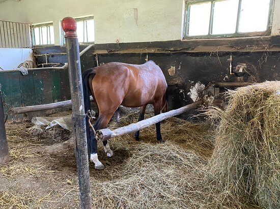 Another pic of a horse in the stables at Radauti.