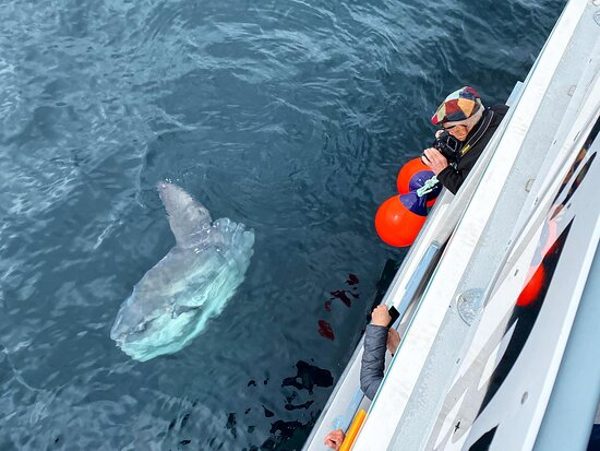 Lots of great photo opportunities! This sunfish was a big show off!!