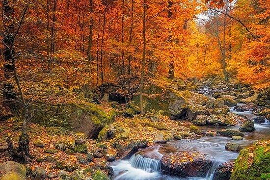 Muskoka Fall Colors (Private tour from Toronto)