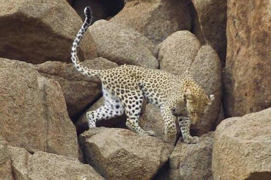 Kruger national Park Big Cat Photography tour