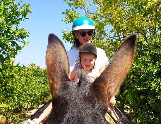 Donkey Tours Algarve