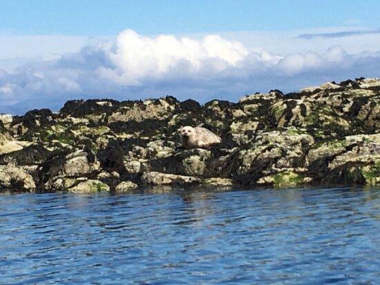 Isle of Eigg Photo