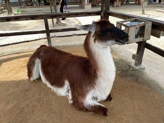 Torius Fureai Zoo