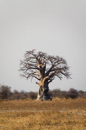 Nxai Pan National Park صورة فوتوغرافية