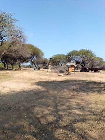 Voi, كينيا: Mara