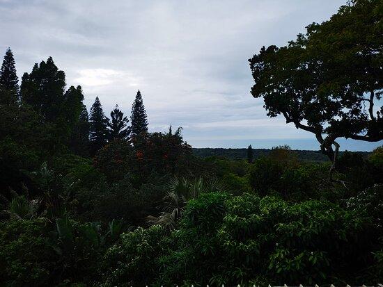 Mtunzini Photo
