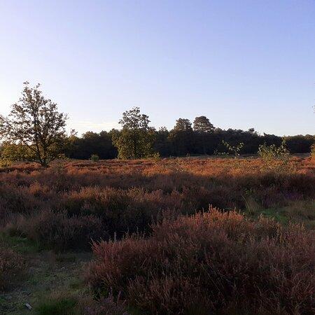 Groendomein Kesselse Heide