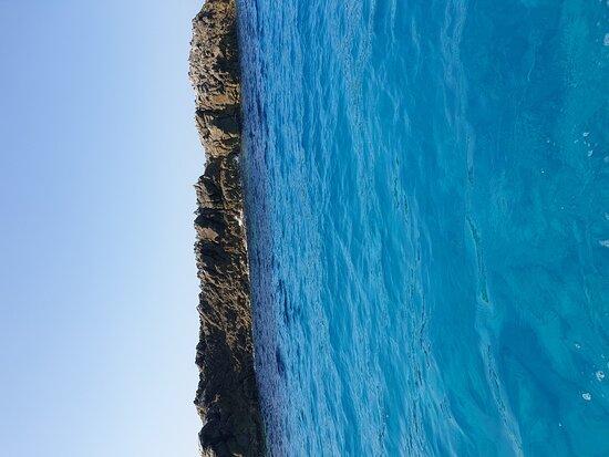 Sea Life Tropea