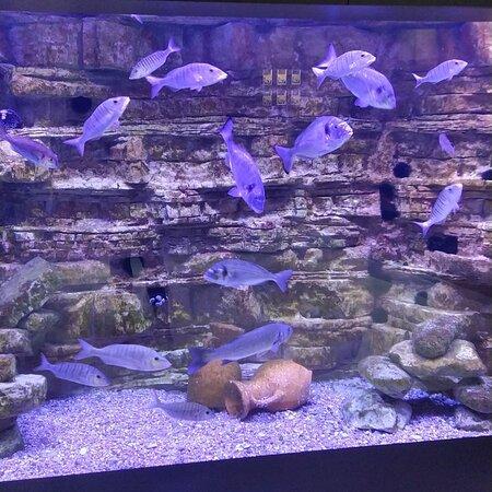 Aquarium Boka