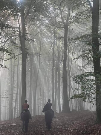 Ljungbyhed, Sverige: Magiska Sözdråsens Nationalpark