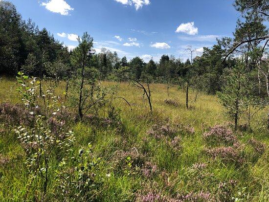 Europaschutzgebiet Ibmer Moor