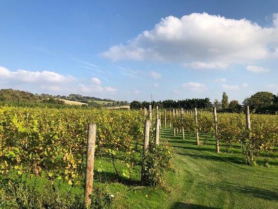Brabourne Vineyard