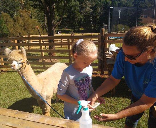 Buddy's Alpaca Farm