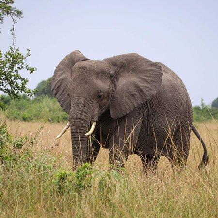 Ntungo Wildlife Safaris