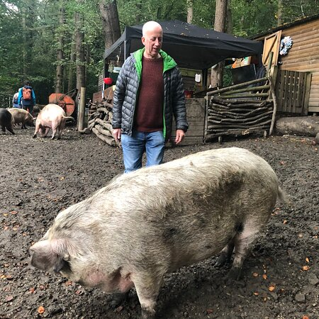Pigs In The Wood