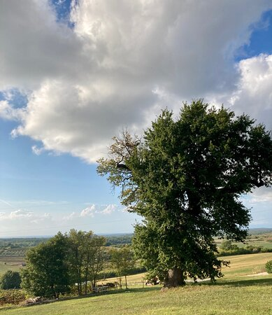 Brtonigla, Croatia: It's also the view!