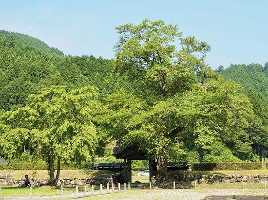 Ichijodani Asakurashi Ruin