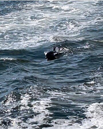 Фотография Big Fun Dolphin Cruise and Sealife Experience Orange Beach