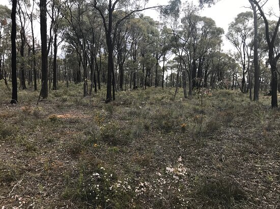 Paddys Ranges State Park