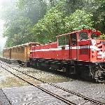 One of the trains in Alishan Country Park