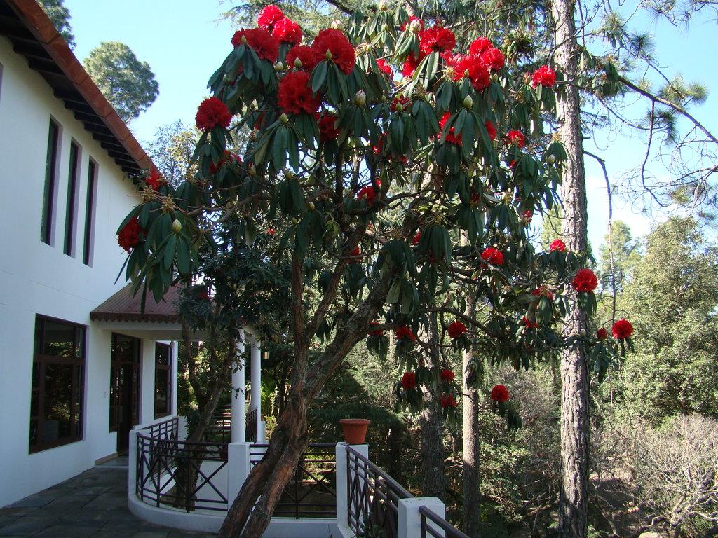 カサール ジャングル リゾート