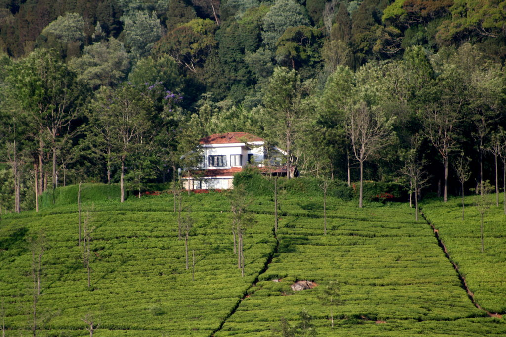 Tranquilitea Farm Stay