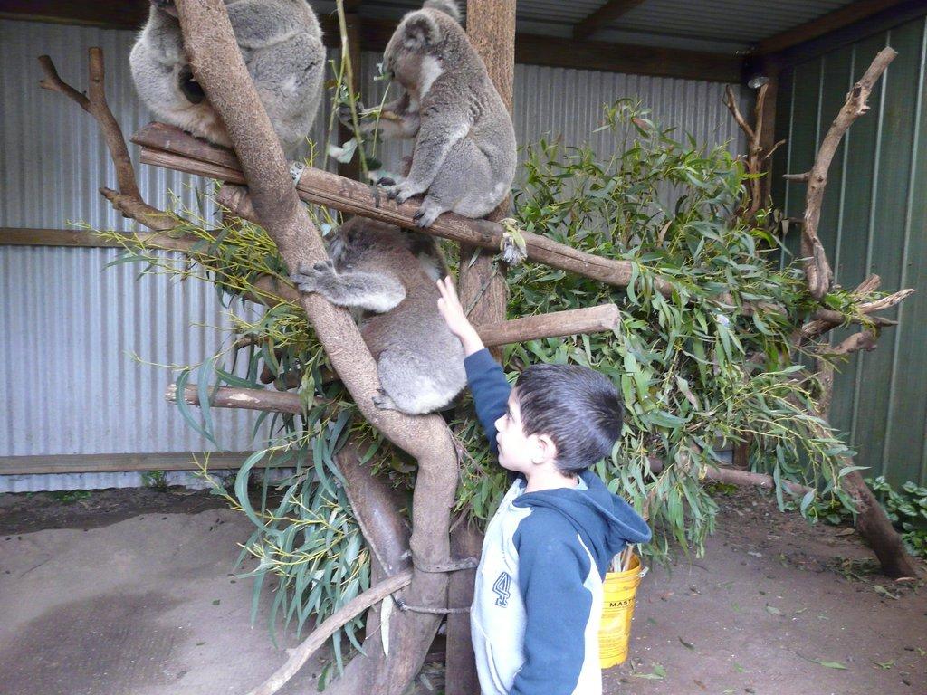 Fauna Australia Wildlife Retreat