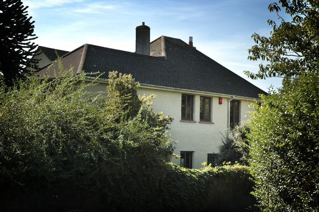 Hollow Tree House