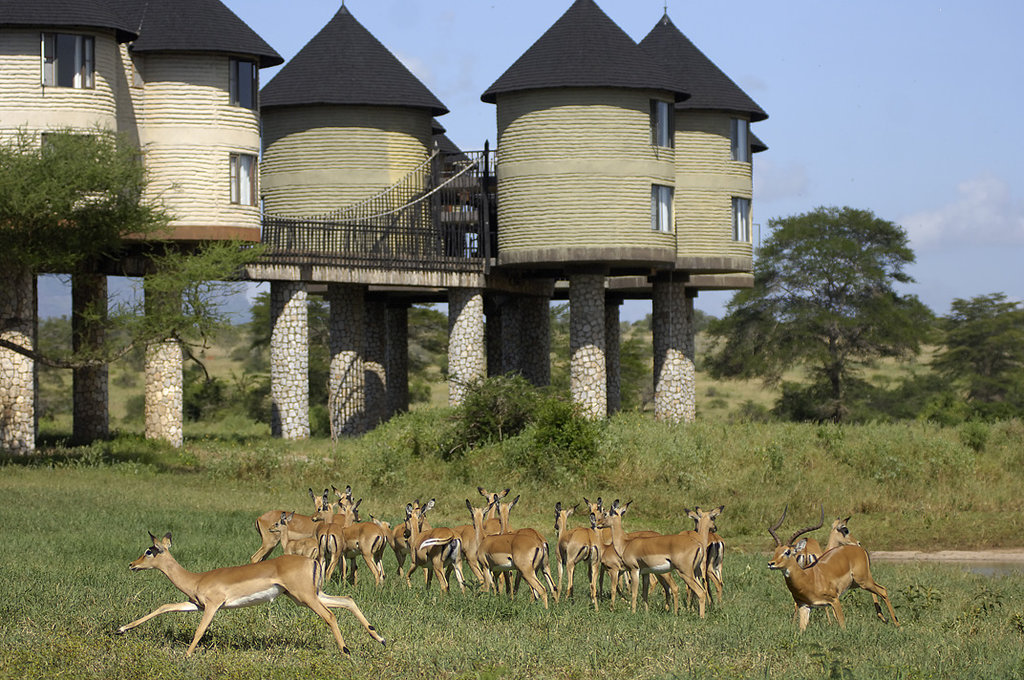 ‪Sarova Salt Lick Game Lodge‬