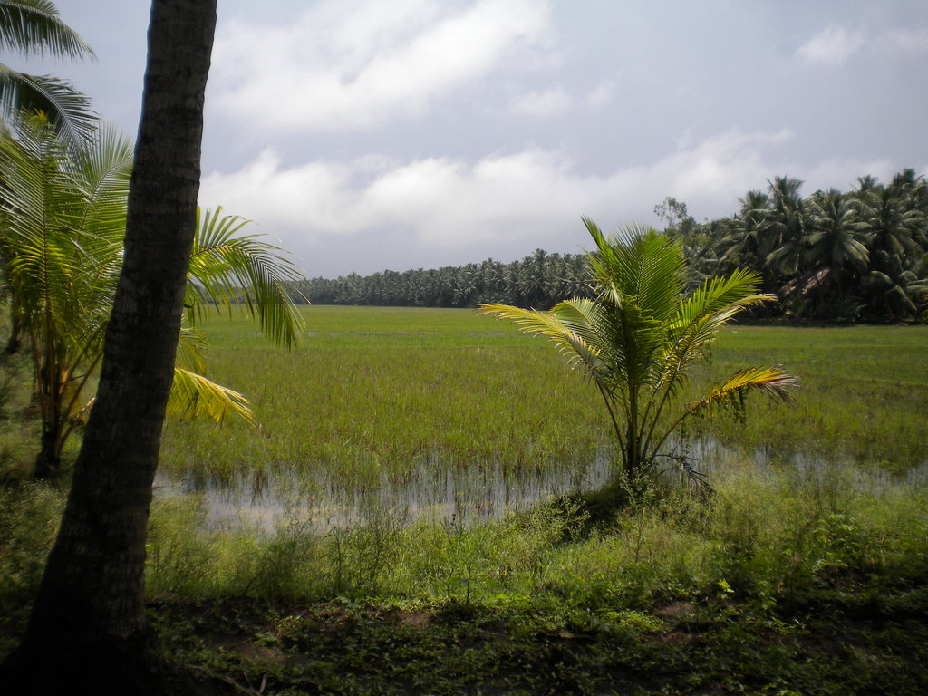 Haritha Coconut Country Resort (APTDC)