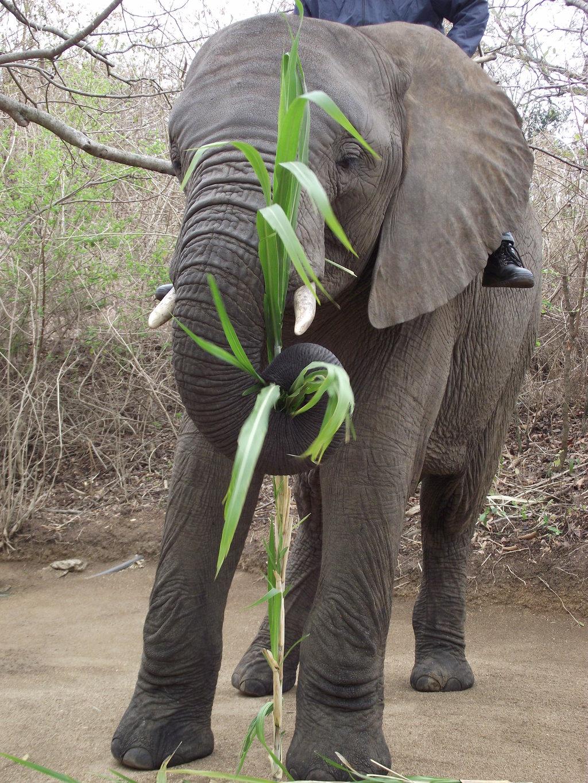 Friendly Elephant!