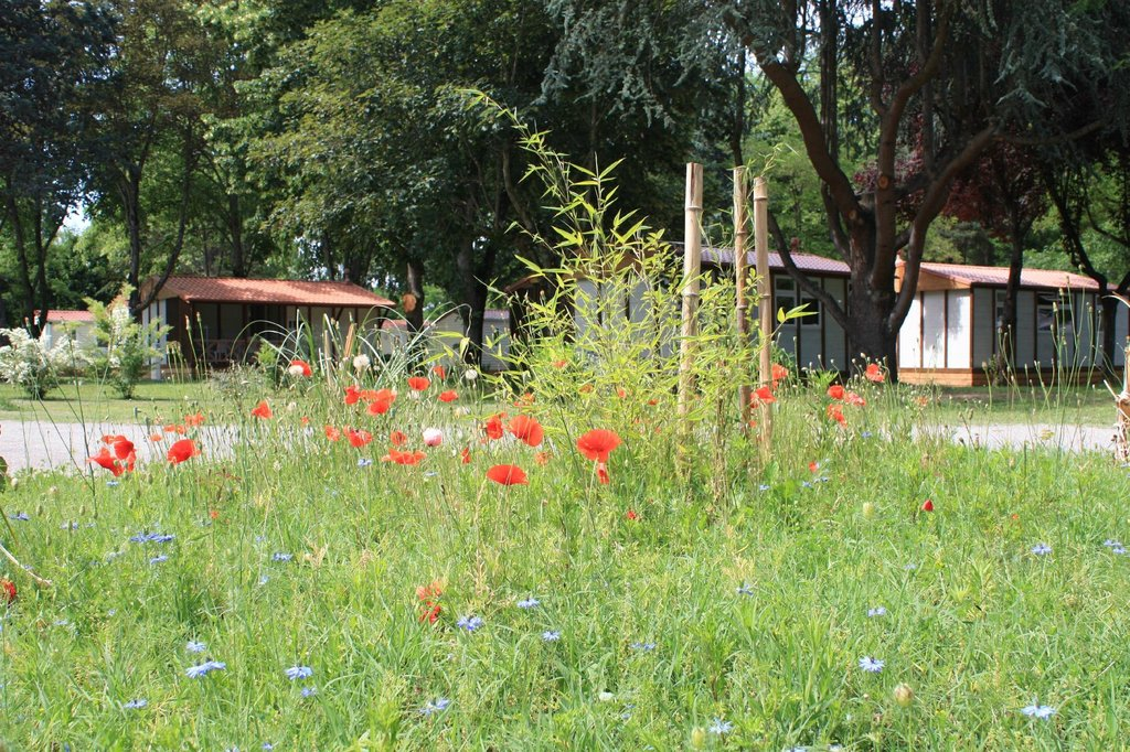 Camping Village l'Apamee