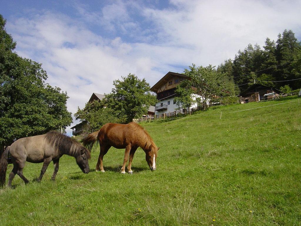 Agriturismo Burgerhof
