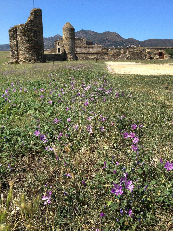 Roses Citadel