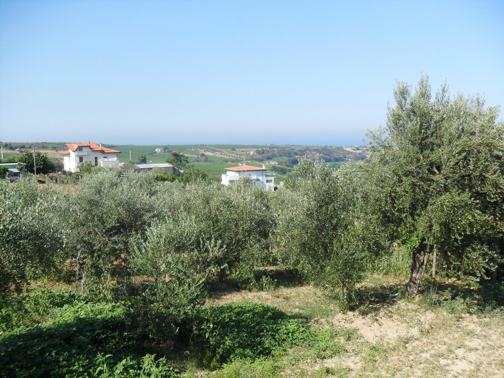 Stella dell'Adriatico