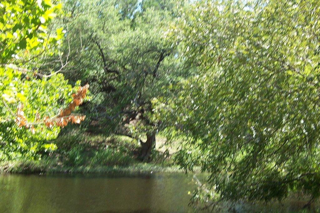 Lancaster's Pecan Grove