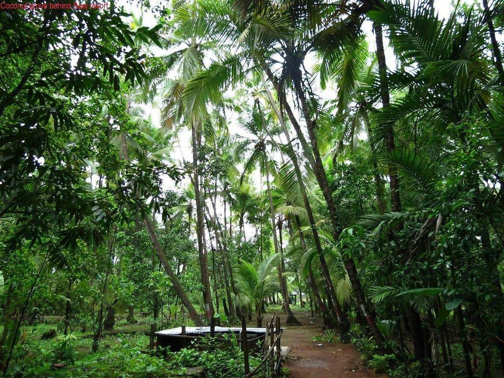Saaj Resort