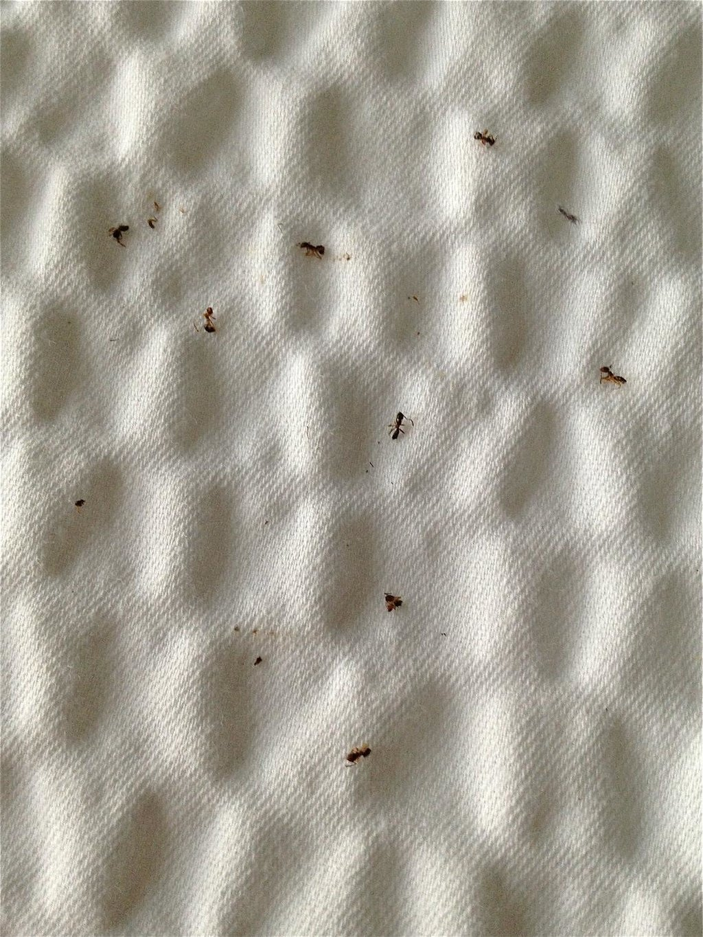 Ant outbreak Room 228 Aug. 25-26, 2013